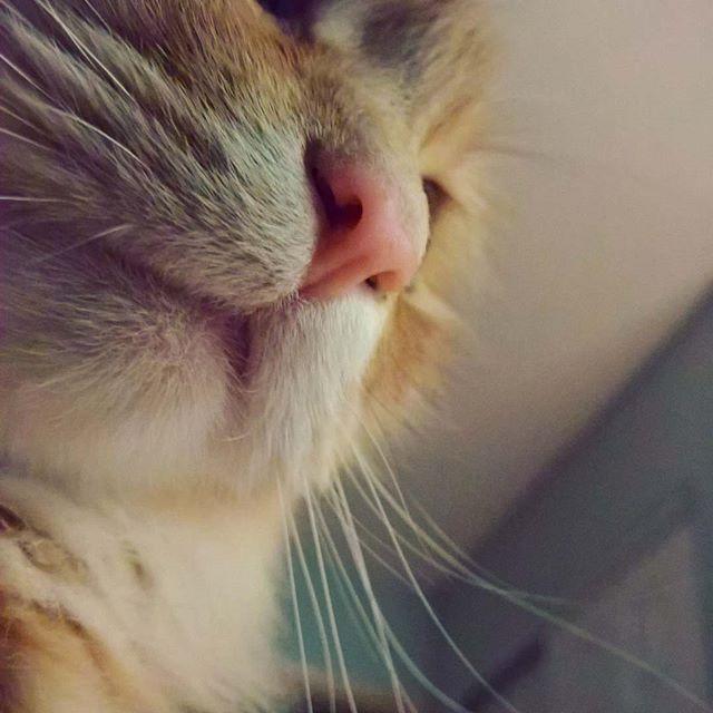 lifeofcats – hobbesxthexcat