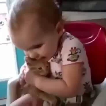 lovecats – balaiodegatosoficial
